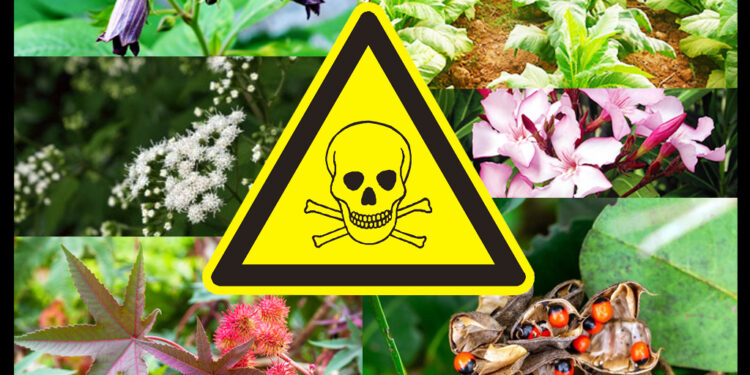 The Most Dangerous Plant Species in the World