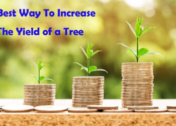 Best Way To Increase The Yield of a Tree